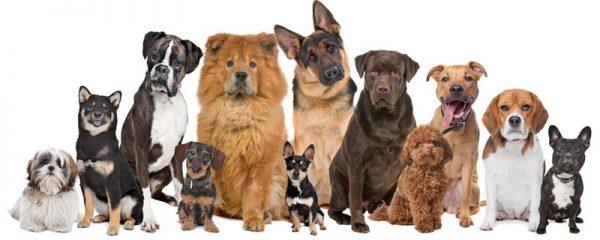 全犬種対応のモグワンドッグフード