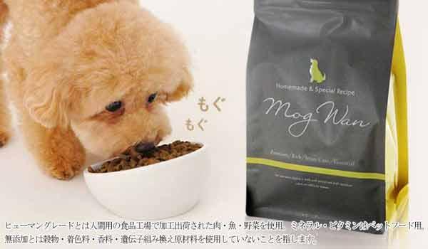 モグワンを食べる犬